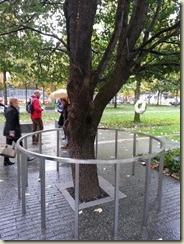 20151028_Survivor Tree 1 (Small)