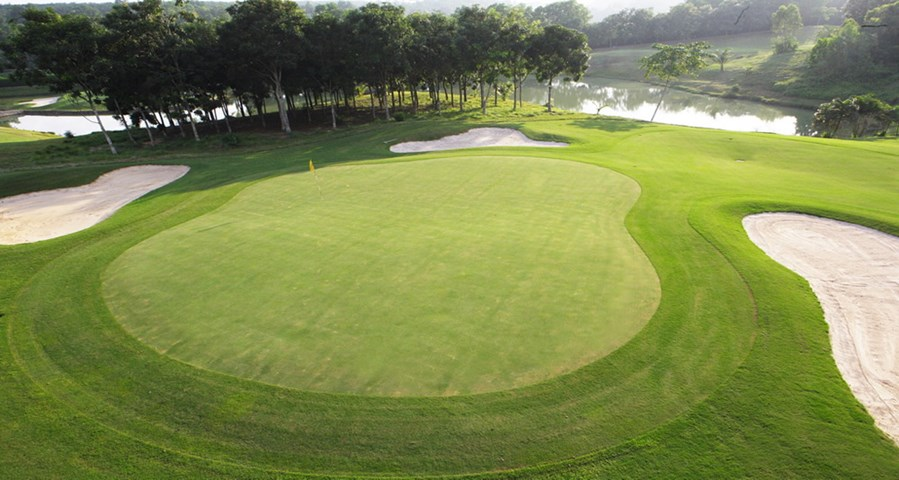 cỏ sân golf