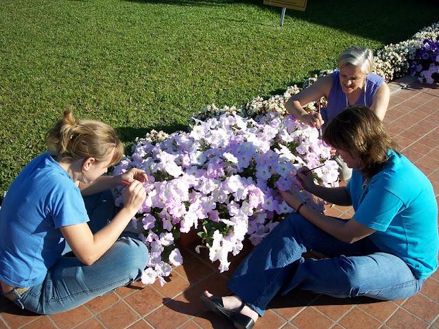 cultivo de plantas florales anuales - 100_0197.JPG