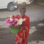 индийская цветочница.JPG