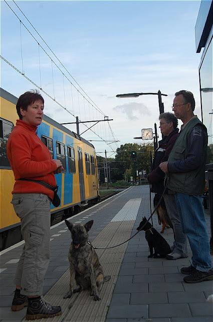 KNON pups in de stad 09-2011 - DSC_0051.JPG