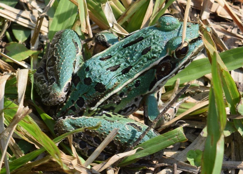 [Frog-2%5B5%5D]