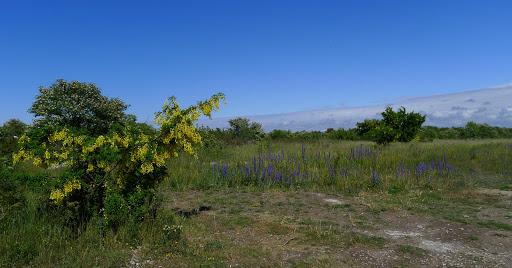 2015-06-14 003(Gotland)c.jpg