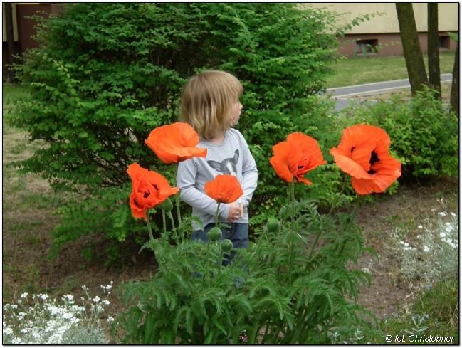 ogrodoweforumpl � wyświetl temat kwiaty zio�a ptaki i
