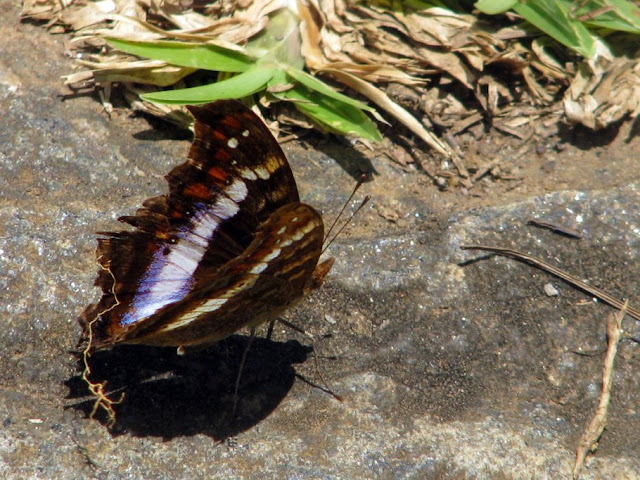 صور من مدغشقر Madagascar 14688164132