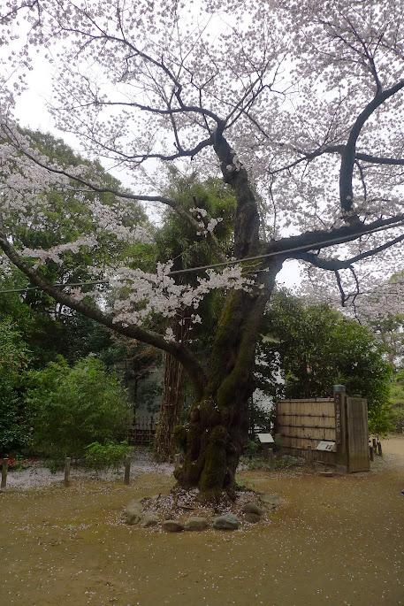 sakura nakano tetsugakudou