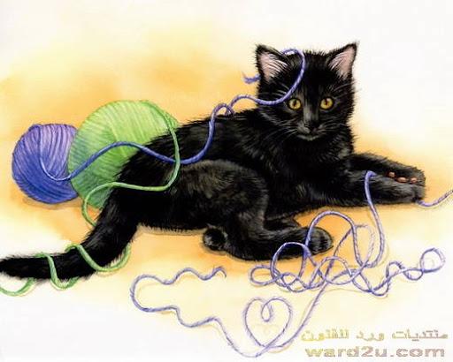 قطط ناعمه ترفل في ورد للفنون