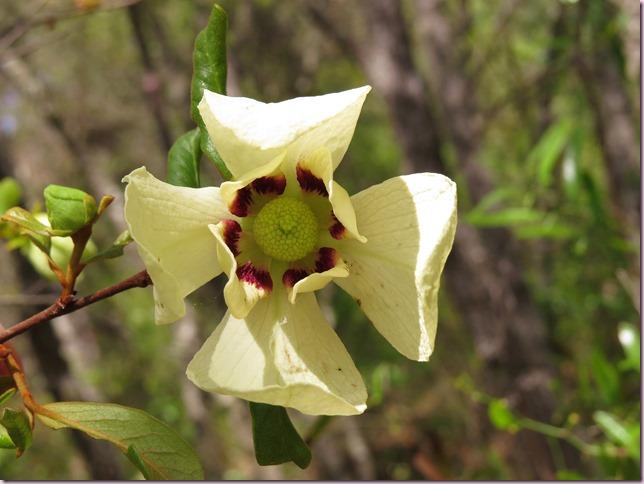 flowerIMG_5760