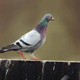 Vogels en dieren - IMG_6336.JPG