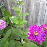 Gardening 2012 - IMG_20120520_174304.jpg