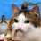 Anatoliy Arkhipov's profile photo