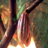 Goddess Ixcacao Image