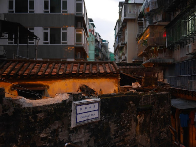 Cat eating above a sign for Calçada do Galo in Macau