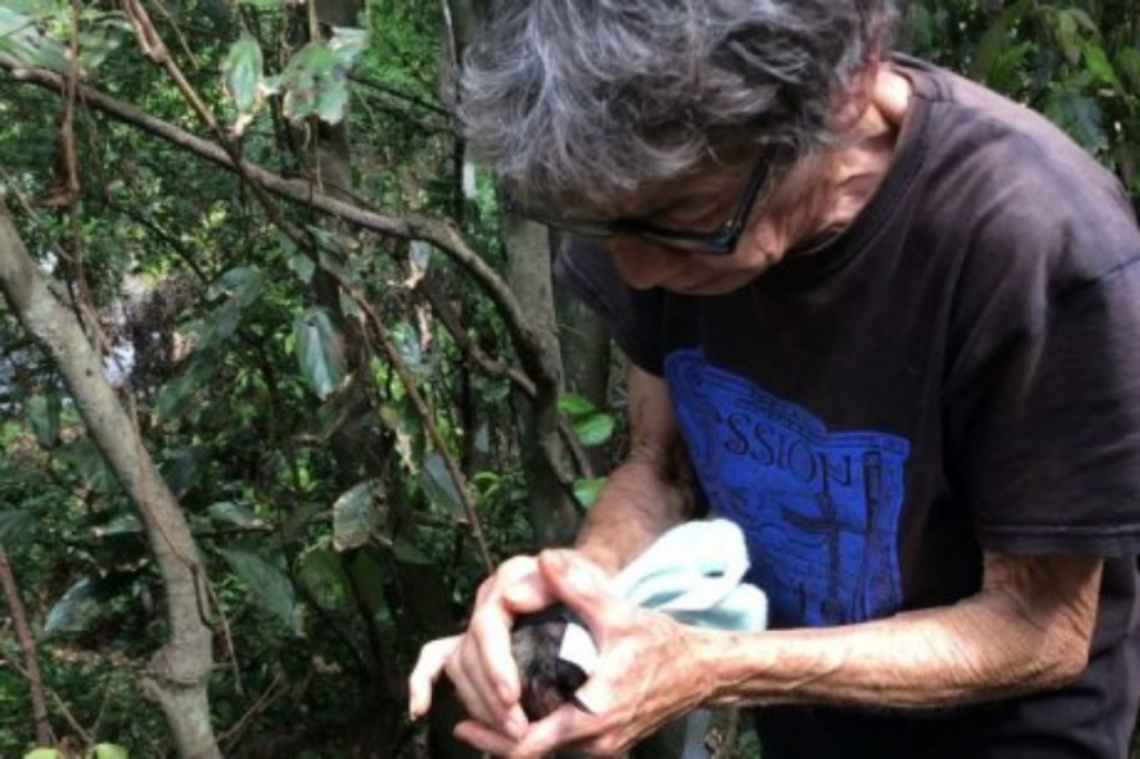 Bat Issues | Flying foxes found slaughtered in Sunshine Coast hinterland