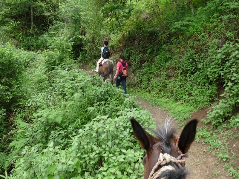 Chine .Yunnan,Menglian ,Tenchong, He shun, Chongning B - Picture%2B928.jpg