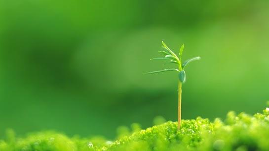 Một hạt giống nhỏ bé