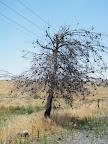 העץ הזה ממש לא שייך לנוף...