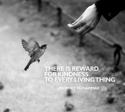 reward-for-kindness