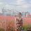 Xuyến Đinh's profile photo