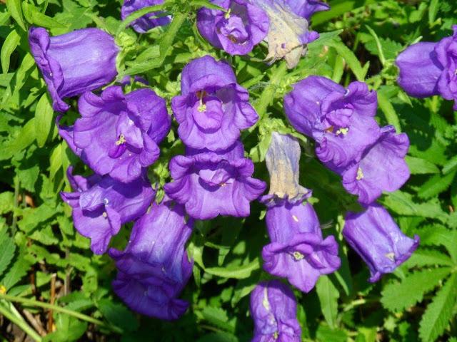 Gartengestaltung k ln gartengestaltung k ln g rtner for Gartengestaltung kinderfreundlich