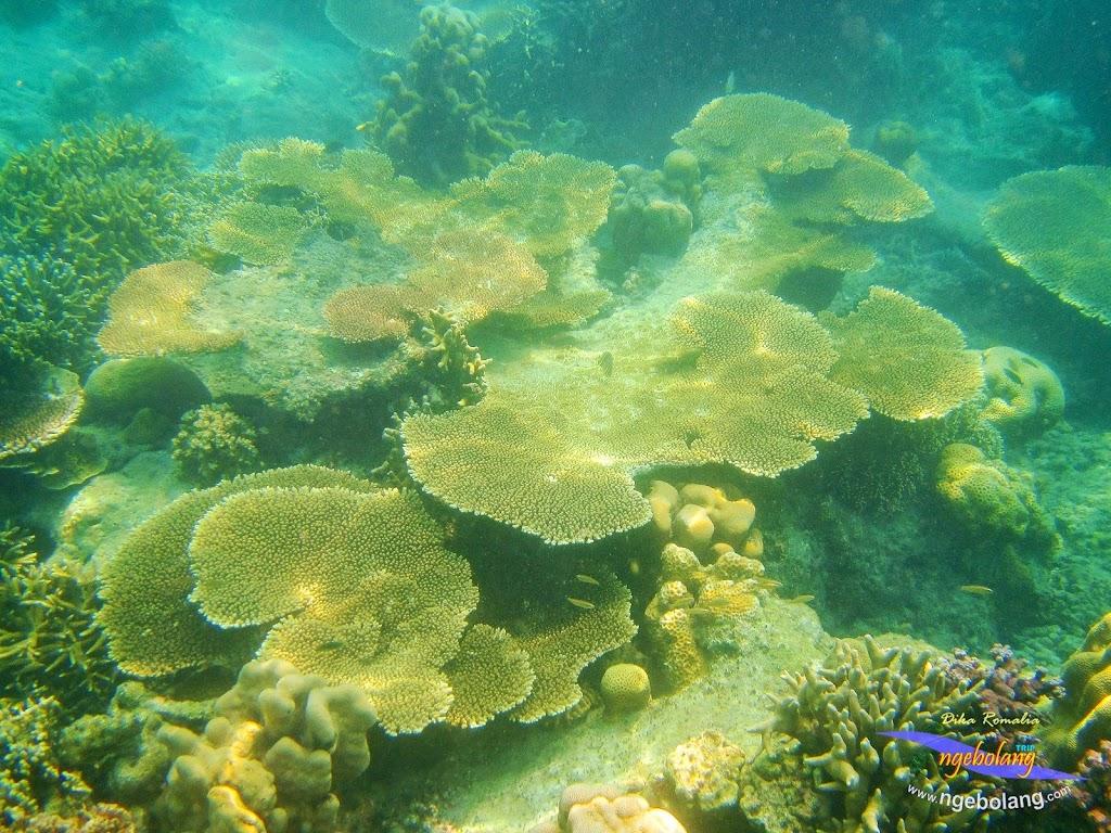 pulau harapan 8-9 nov 2014 diro 10