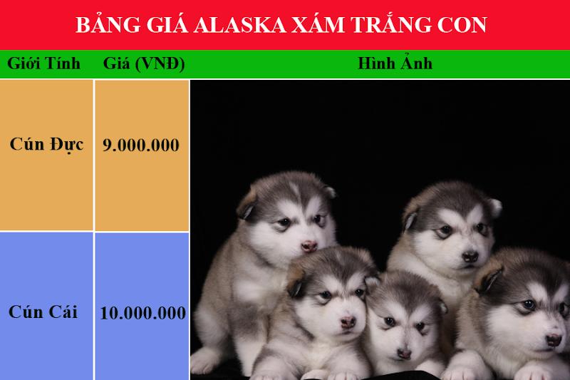 bảng giá chó alaska