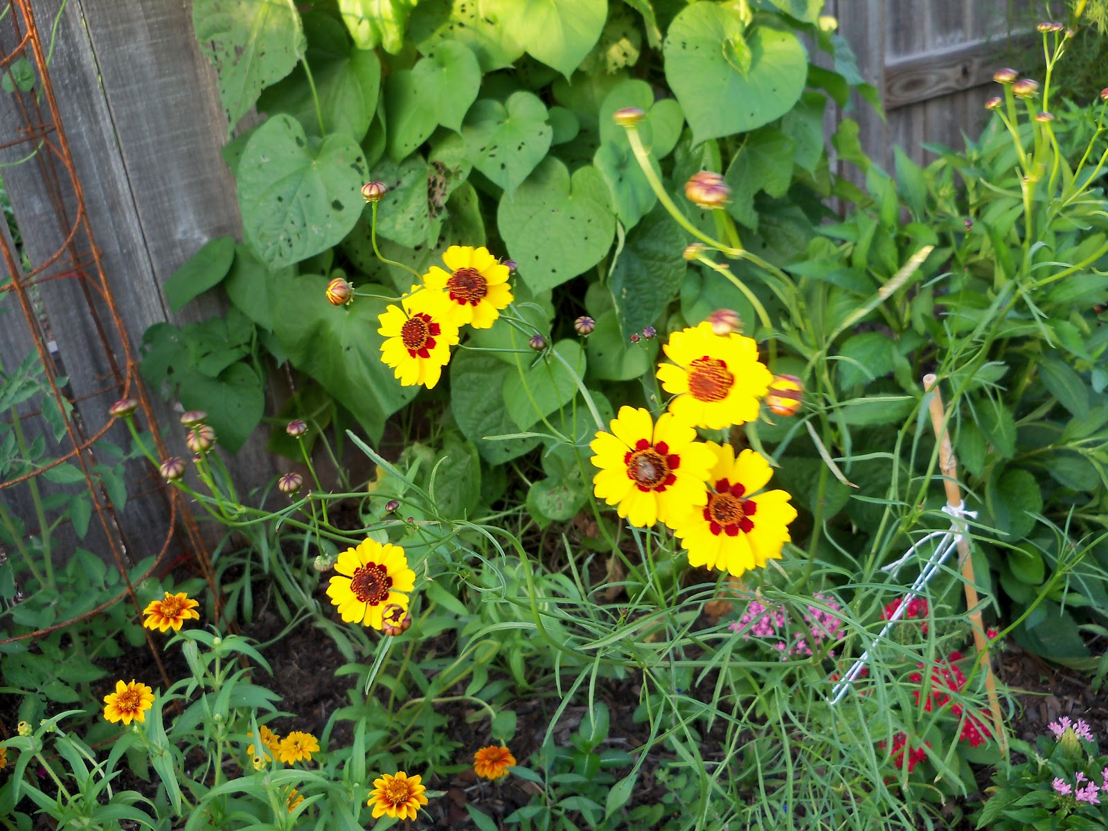 Gardening 2010, Part Three - 101_3644.JPG