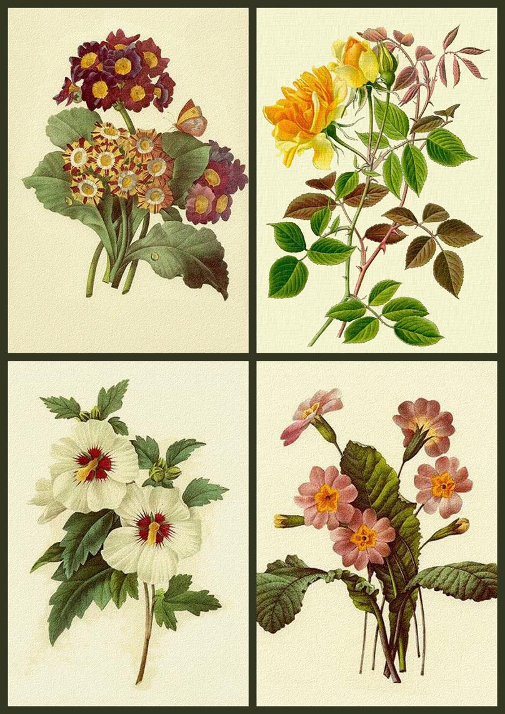 Artbyjean Vintage Clip Art Digital Collage Sheet Flower Prints