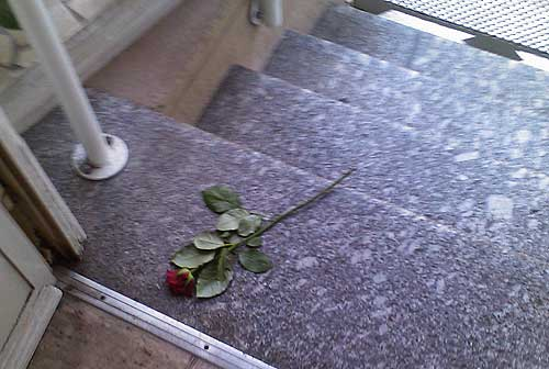 Eine Rose auf meiner Eingangstreppe