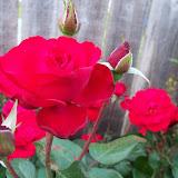 Gardening 2011 - 100_7746.JPG
