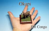 Okapi -DR Congo-