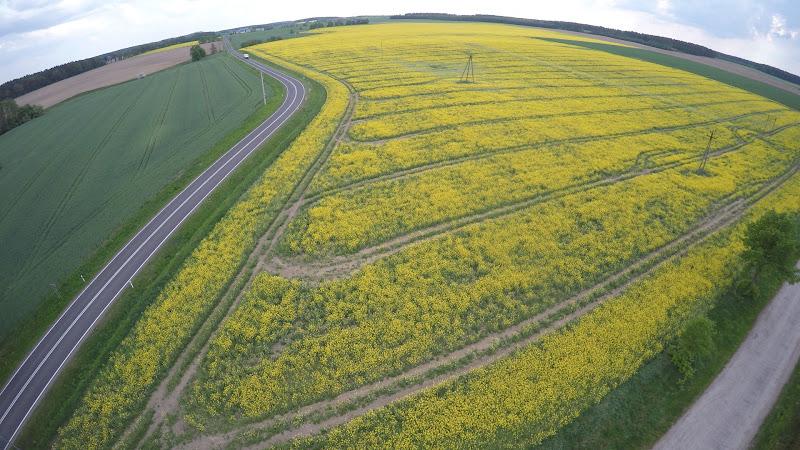 wynajem drona zdjęcia z lotu ptaka z drona pola rzepaku w miejscowości Zamarte z lotu ptaka