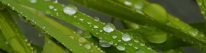 Gotas de lluvia, selva chiapaneca