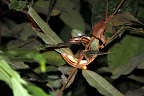 Snake in Reserve Zone (Manu National Park, Peru)