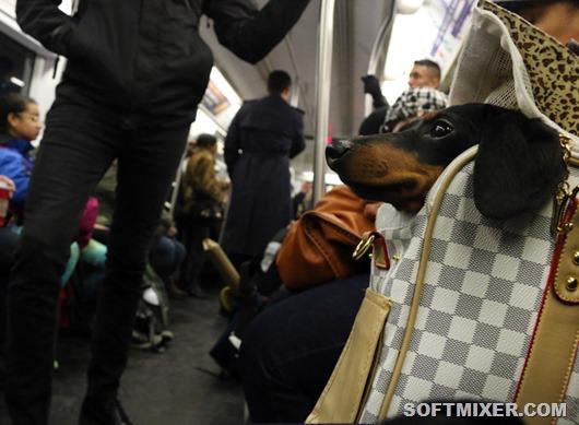 dog-on-new-york-subway