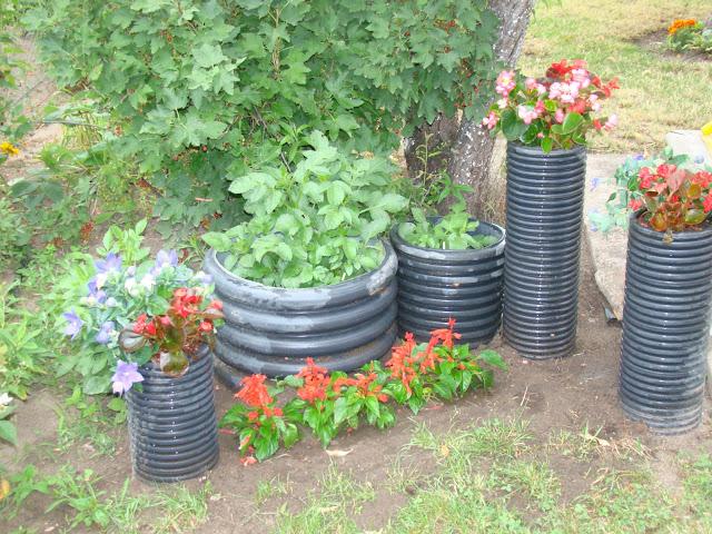 Forum Ogrodnicze Oaza Topic Tam Gdzie Czas Płynie