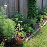 Gardening 2010, Part Two - 101_3098.JPG