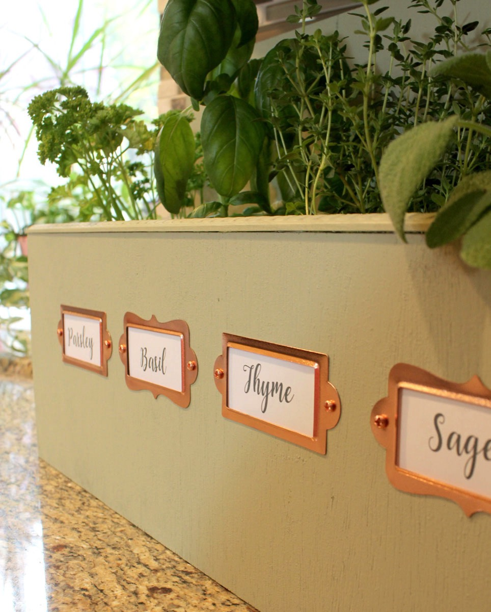 Live herbs in kitchen herb garden