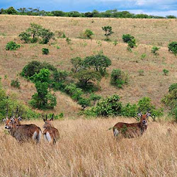 Akagera National Park's profile photo