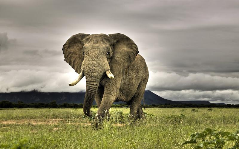 Best Wild Animal Photos of 2012 march first week