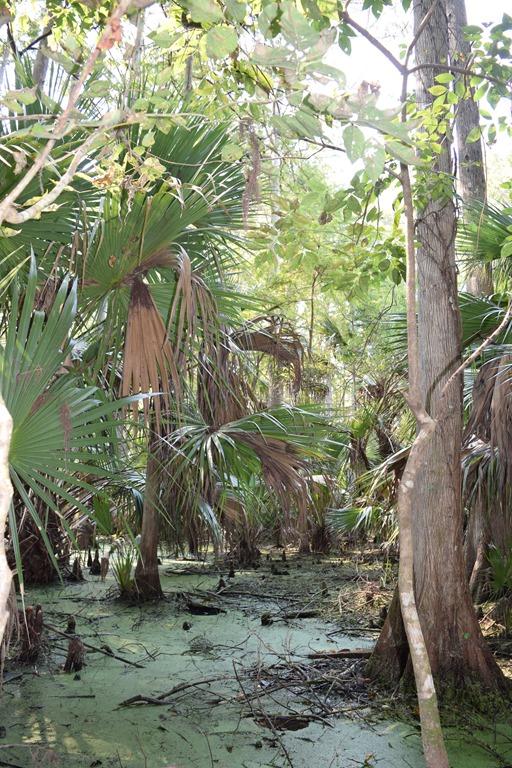 [Swamp-2%5B10%5D]