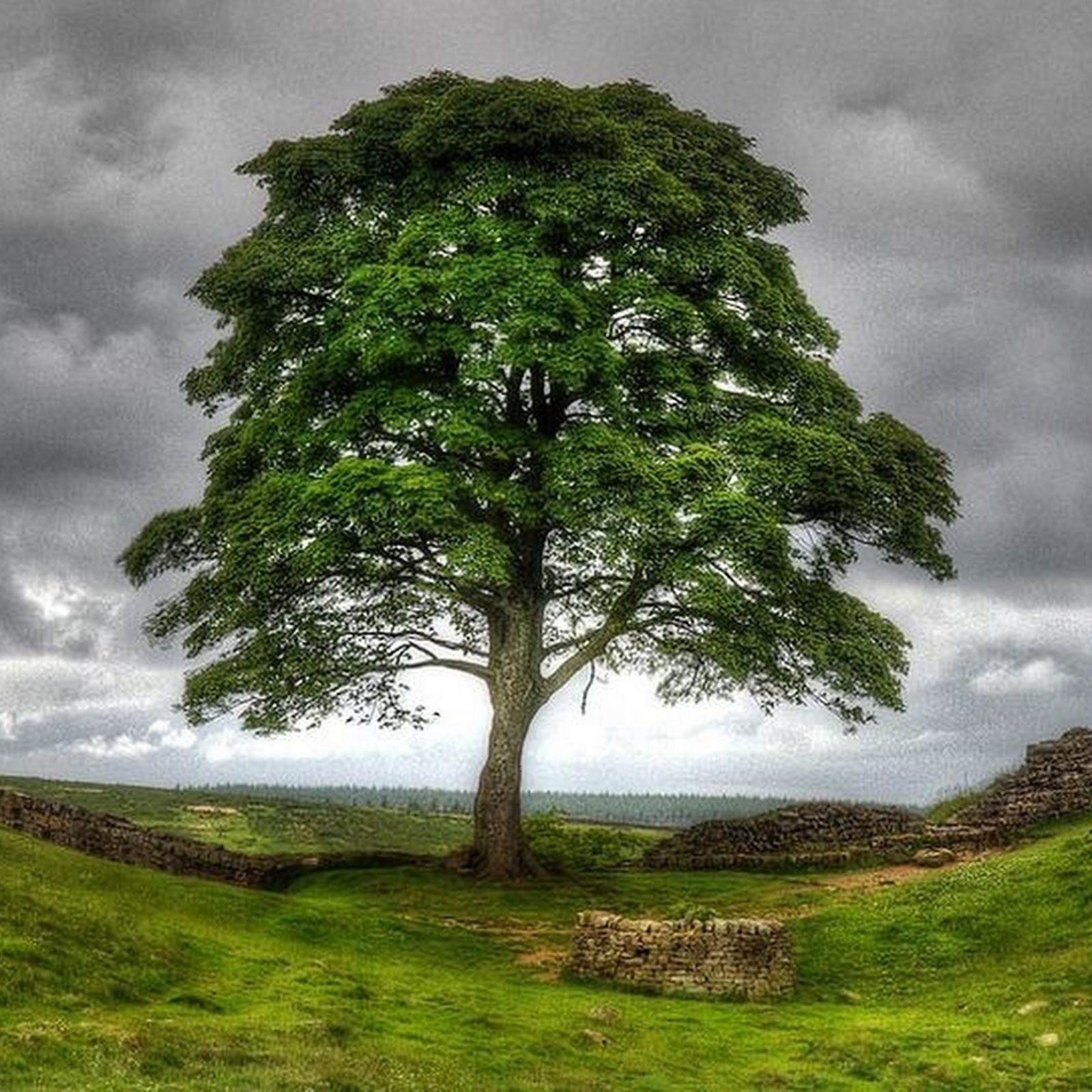 Trees Made Famous by Movies, Music, Art And Literature