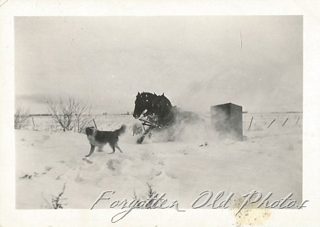 Horse and dog Wahpeton Ant