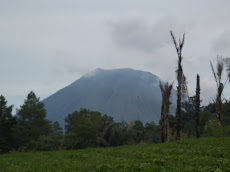 Tomohon, Indonesia. We came to climb Mount Lokon (here) but learned on arrival that it was active- they actually evacuated part of the village. Whoops!
