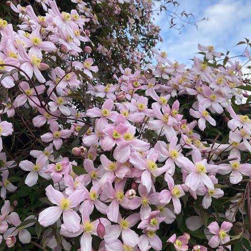 Tokuko Munesue