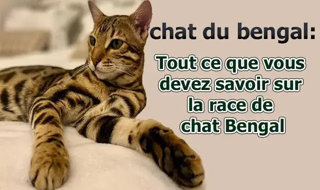 chat Bengal