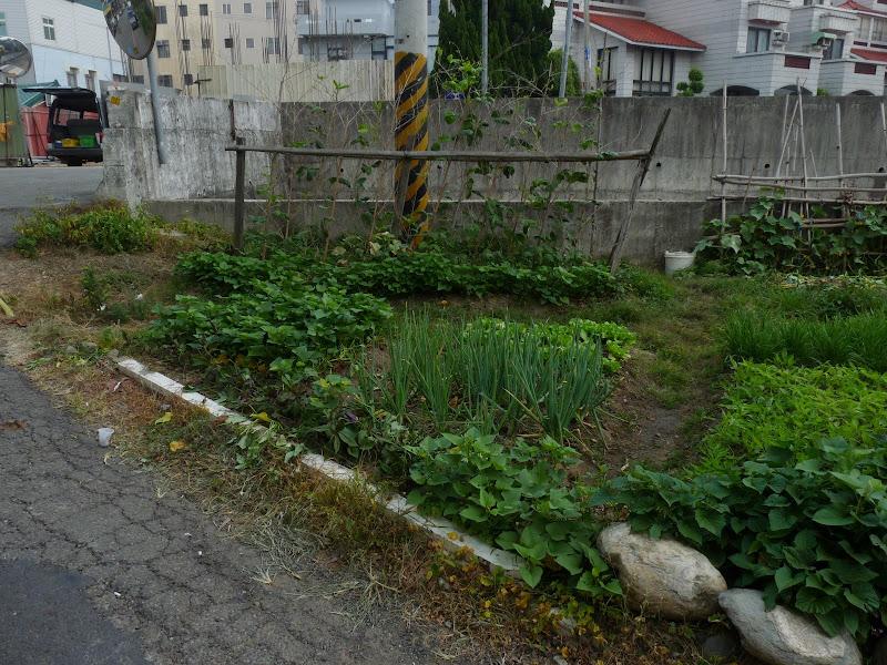 TAIWAN.Dans la région de MIAOLI - P1090494.JPG