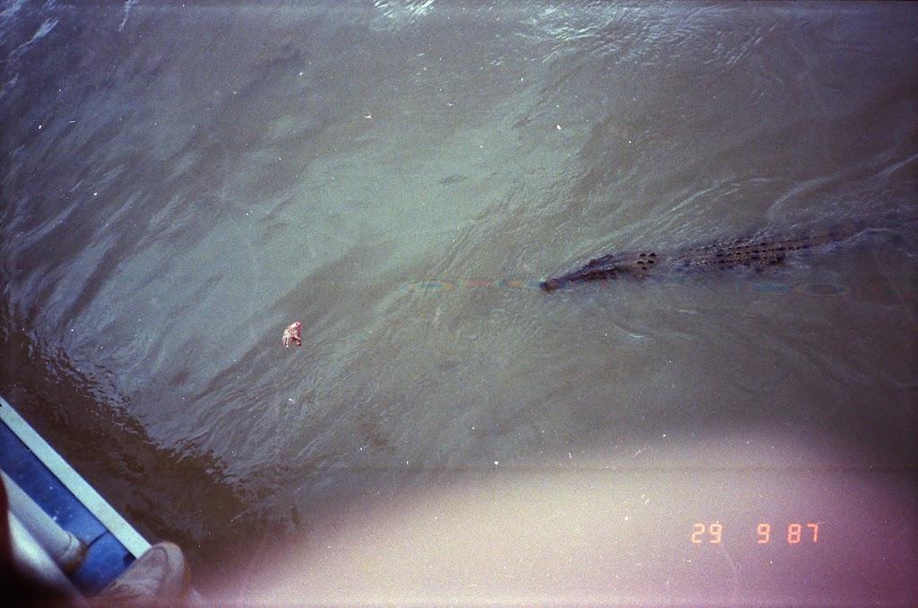 6140Adelaide River Croc Tour
