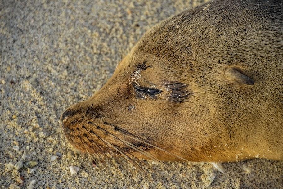 galapagos - Galapagos_FB_2-88.jpg