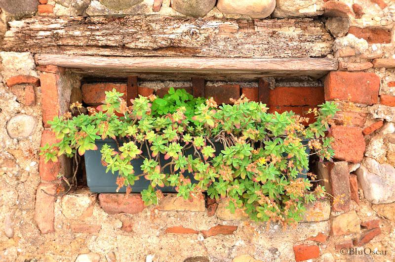 Villa Maser mostra ciliegie 34